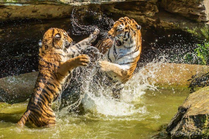 МЫШЦЫ. Крадущийся тигр, притаившийся дракон