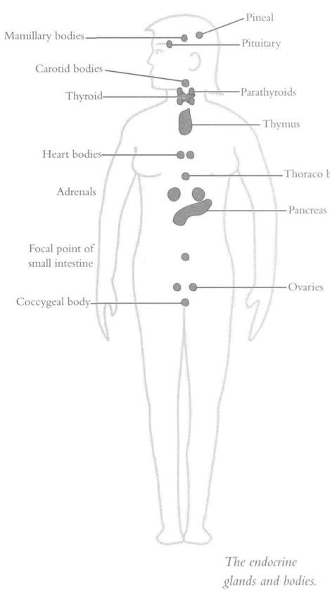 эндокринная система изучение опытным путем